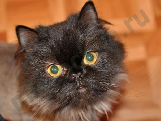 кошка смотрит большими жёлтыми глазами